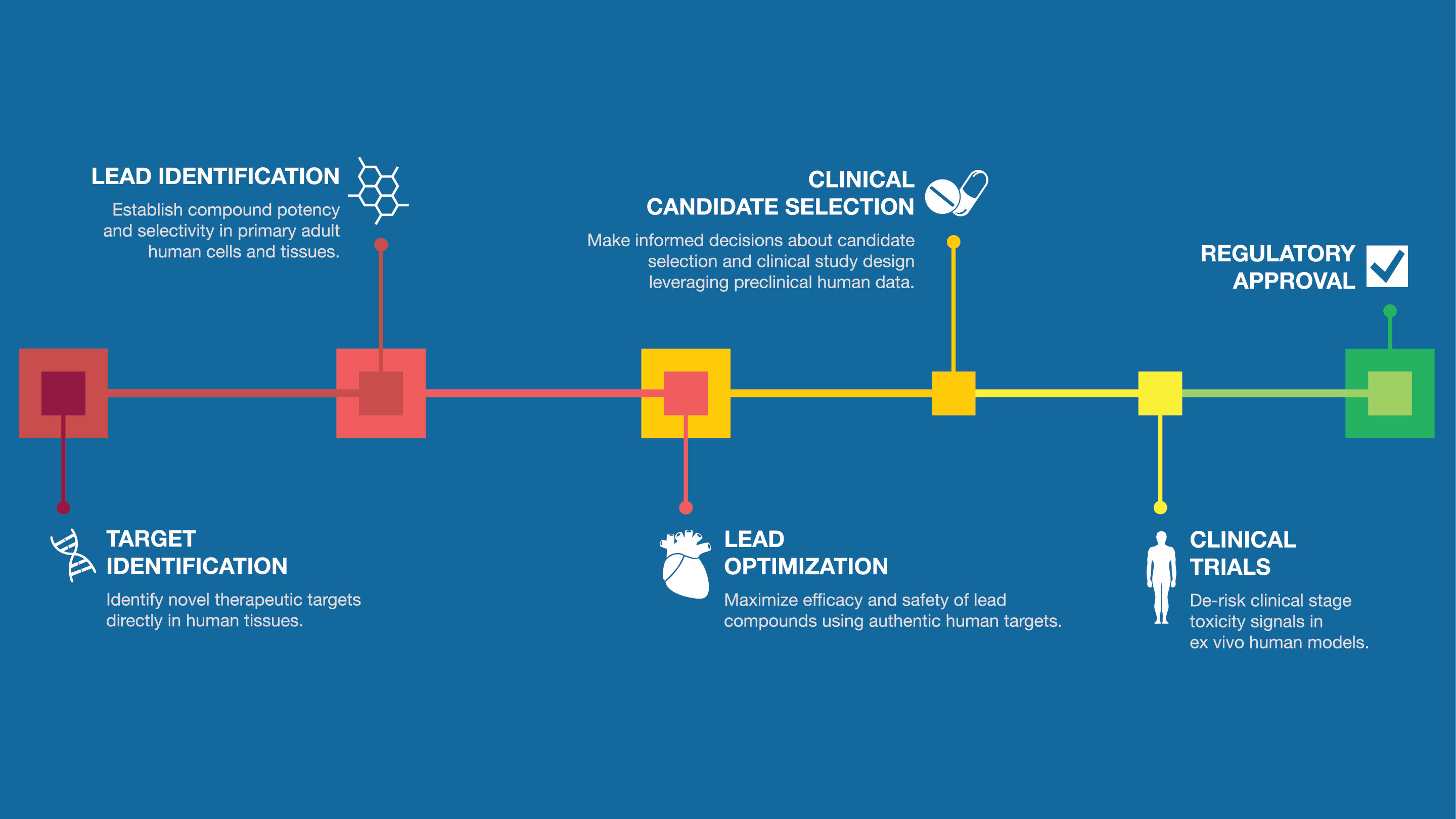 AnaBios Drug Discovery Process